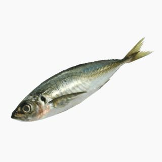 Horse mackerel (raw)