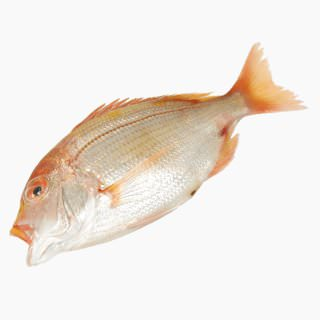 Yellow sea bream (raw)