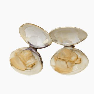 Hard clam (boiled)