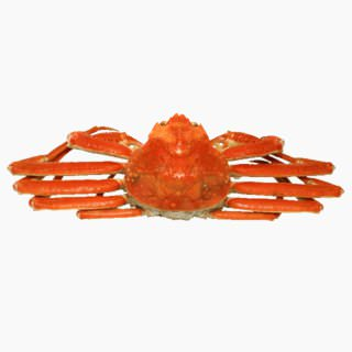 Snow crab (boiled)