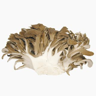 Maitake (dried)