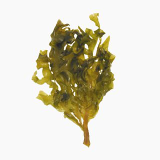 Wakame, Dried product (dried, soaked in water)